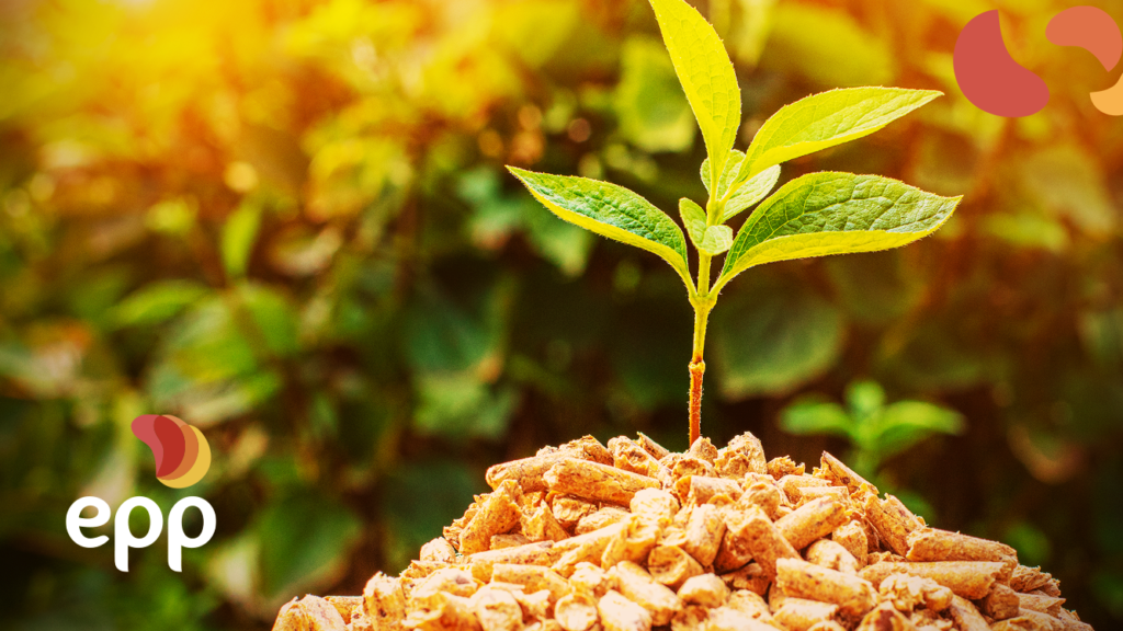 Biomass powered thermoelectric plants: understand the growth of this model!