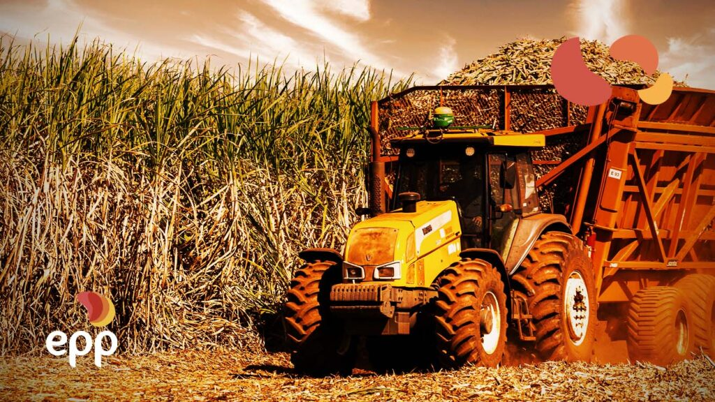 The importance of biomass for the energy matrix
